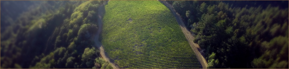 vineyardoverview